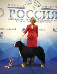 best_puppy_.jpg